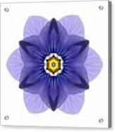 Blue Pansy I Flower Mandala White Acrylic Print
