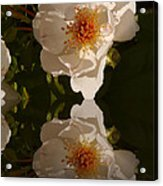White Briar Rose Reflection Acrylic Print