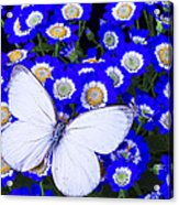White Butterfly In Blue Flowers Acrylic Print