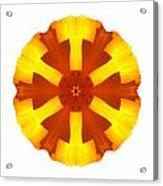 California Poppy I Flower Mandala White Acrylic Print