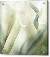 White Calla Moods Acrylic Print