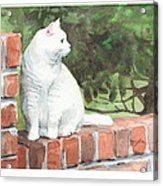 White Cat On Brick Wall Watercolor Portrait Acrylic Print