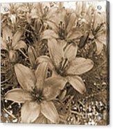 White Chocolate Acrylic Print