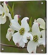 White Cross Flowers Acrylic Print