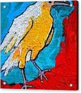 White Crow Acrylic Print