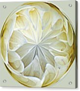 White Dahlia Orb Acrylic Print