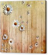 White Daisies Acrylic Print by David Ridley