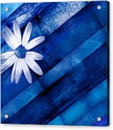 White Daisy On Blue Two Acrylic Print