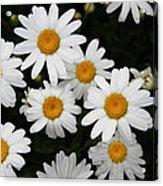 White Daisy's On The Rim Acrylic Print
