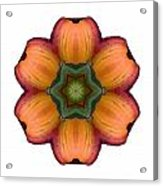 Daylily I Flower Mandala White Acrylic Print