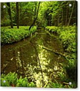 White Deer Creek Acrylic Print