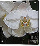 White Dream Orchid Acrylic Print