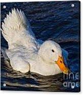 White Duck 2 Acrylic Print