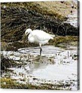 White Egret Acrylic Print