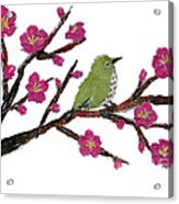 White Eye And Japanese Plum Tree Acrylic Print