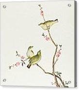 White Eye Bird Acrylic Print