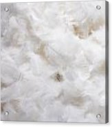 White Feathers Acrylic Print
