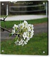 White Florescence Acrylic Print