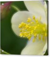 White Flower And Swirls Acrylic Print