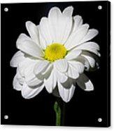 White Flower Acrylic Print by Gennadiy Golovskoy