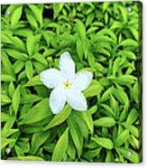 White Flower On Green Acrylic Print