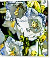 White Flower Spendor Acrylic Print