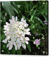 White Flowerettes Acrylic Print