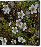 White Flowers And Moss Acrylic Print