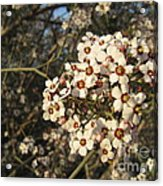 White Flowers Tree Acrylic Print by Ioana Ciurariu