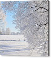 White Frost Acrylic Print by Conny Sjostrom