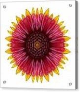 Galliardia Arizona Sun I Flower Mandala White Acrylic Print