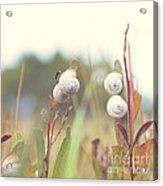 White Garden Snail Acrylic Print