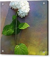 White Glory Acrylic Print by George  Page