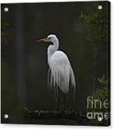 Heron Feathers In A Ruffle Acrylic Print
