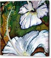 White Hibiscus Acrylic Print