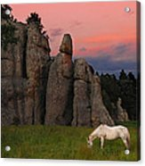 White Horse Grazing Acrylic Print