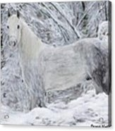 White Horse In The Snow Acrylic Print