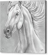 White Horse Acrylic Print