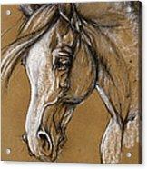 White Horse Soft Pastel Sketch Acrylic Print