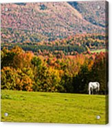 White Horses Grazing With View Of Green Mtns Acrylic Print