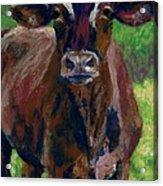 White Horseshoe Acrylic Print