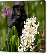 White Hyacinth In The Garden Acrylic Print
