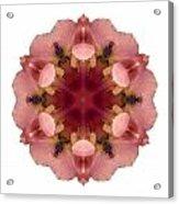 Iris Germanica I Flower Mandala White Acrylic Print