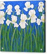 White Irises Acrylic Print