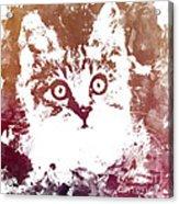 White Kitty Acrylic Print