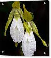 White Lady's Slipper Pair Acrylic Print