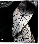 White Leaves Acrylic Print
