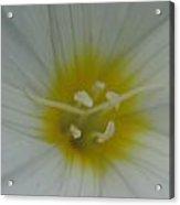 White Light Acrylic Print