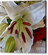 White Lilly Acrylic Print