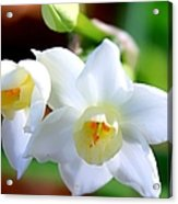 White Lilly Acrylic Print